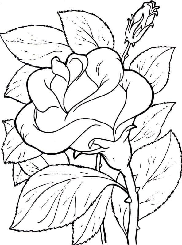 Mejores Imágenes De Amor Para Dibujar A Lapiz Fáciles 30